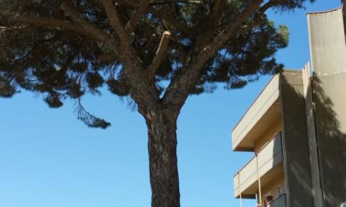 """Mazzarino. """"Salvare un albero di pino secolare perchè dovrebbe essere tagliato dal comune"""". Questo l'appello di alcuni cittadini"""