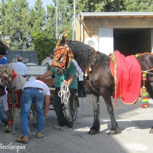 I RITINI- Vestizione e sfilata di cavalli e carretti.