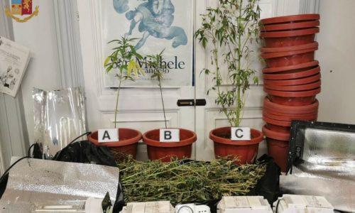 Leonforte. La Polizia di Stato denuncia un giovane leonfortese per coltivazione di cannabis.