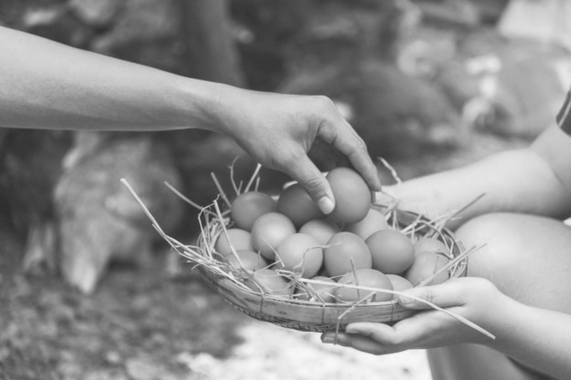 """Siciliani e Sicilianità-""""Attìa di l'ovu"""" esclamazione siciliana utilizzata dai padroni per richiamare al dovere i contadini"""