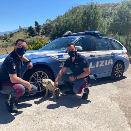 LA POLIZIA DI STATO SALVA CAGNOLINO IN AUTOSTRADA