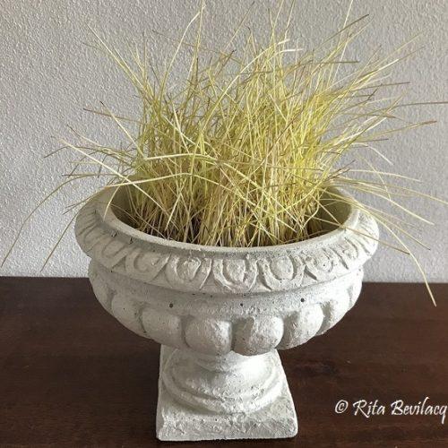 """""""U lavuriddu"""": il rituale festivo dei germogli di grano"""